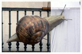 caracol2 266x176 - Obra Propia (Escultura), objetos decorativos.