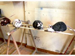 ratones 313x232 - Títeres y Marionetas.
