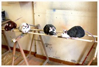 ratones - Títeres y Marionetas.